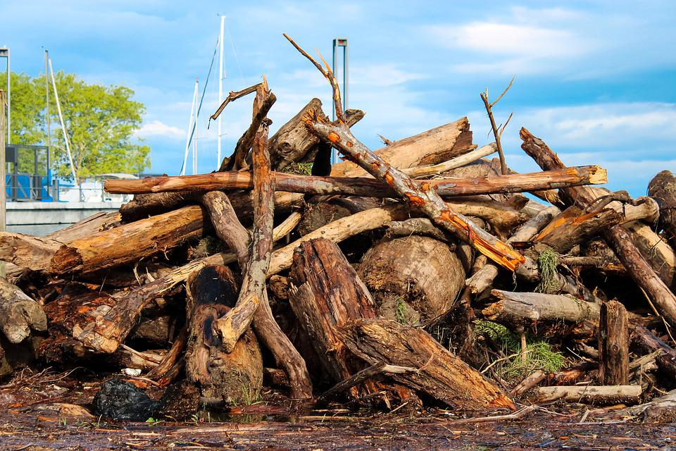 Driftwood, Wood, Nature, Beach, Water, Sand, Sea