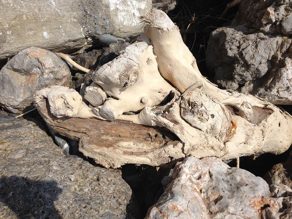 Drift Wood, Driftwood, Flotsam, Wood, Beach
