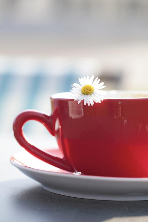 Cup, Tee, Margarite, Flower, Coffee, Teacup, Drink