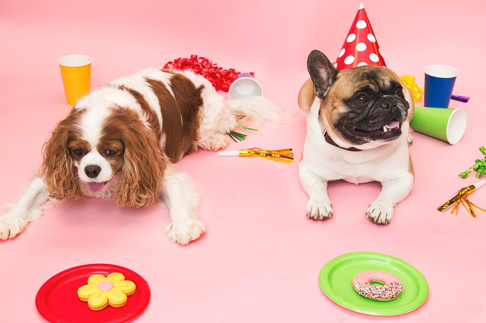 Party, Dog, Small, Drink, Anniversary
