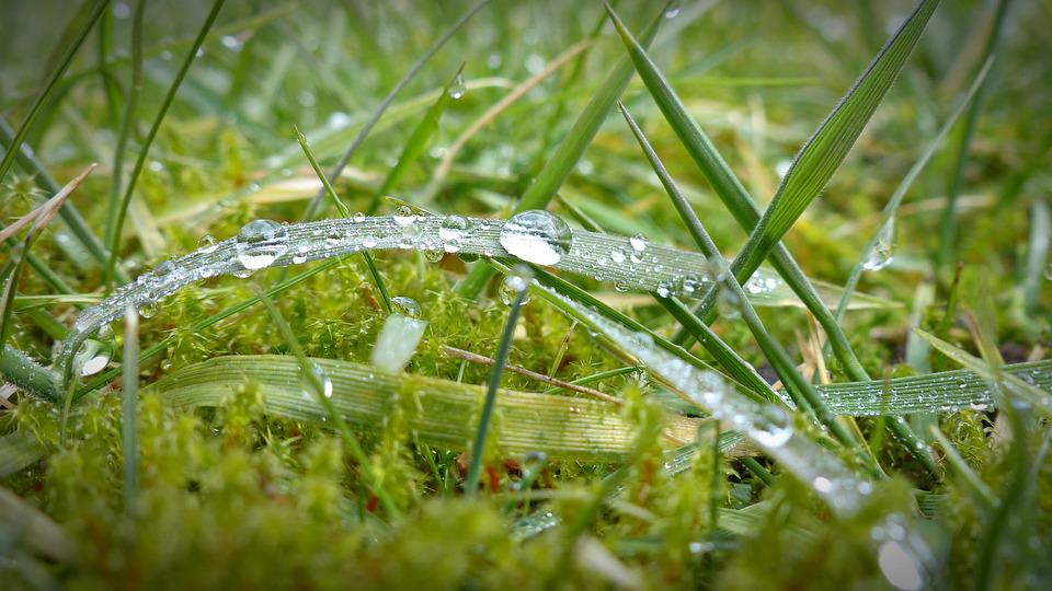 Morgentau, Drip, Dewdrop, Grass, Wet, Close