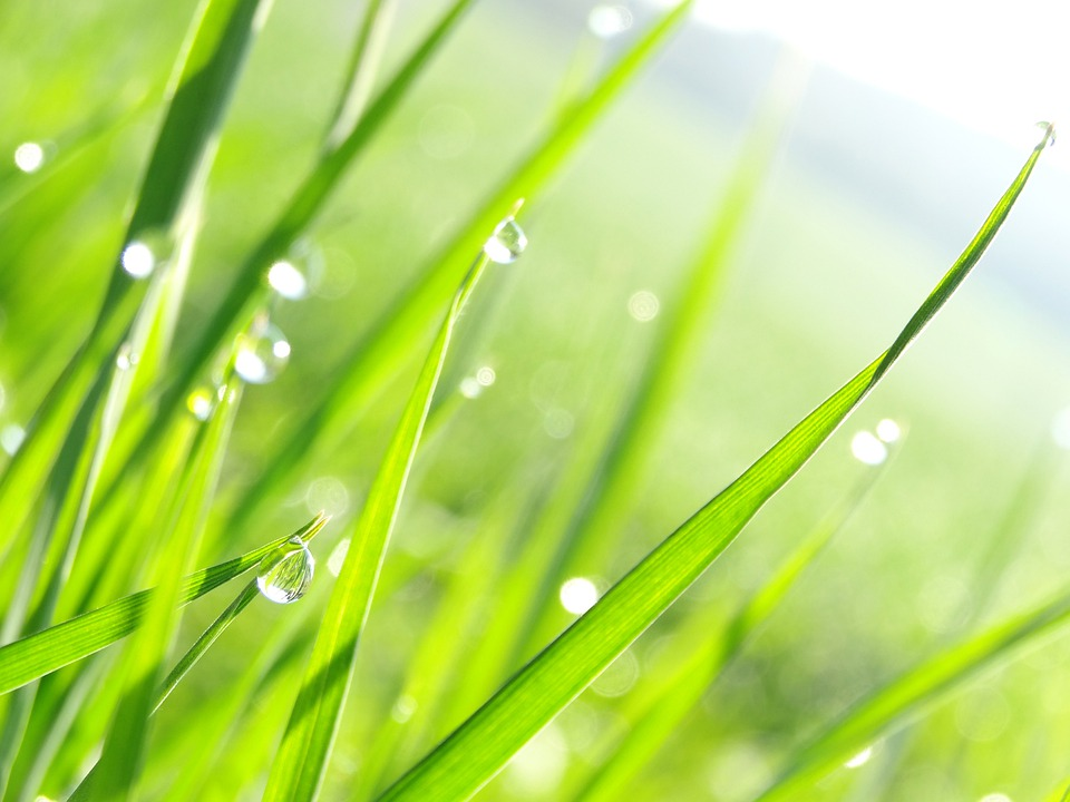 Drip, Grass, Nature, Green, Plant, Morning, Dewdrop