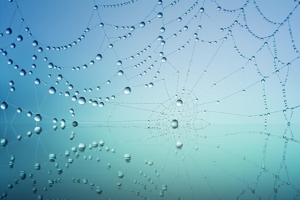 Cobweb, Drip, Water, Mirroring, Blue, Dew, Nature