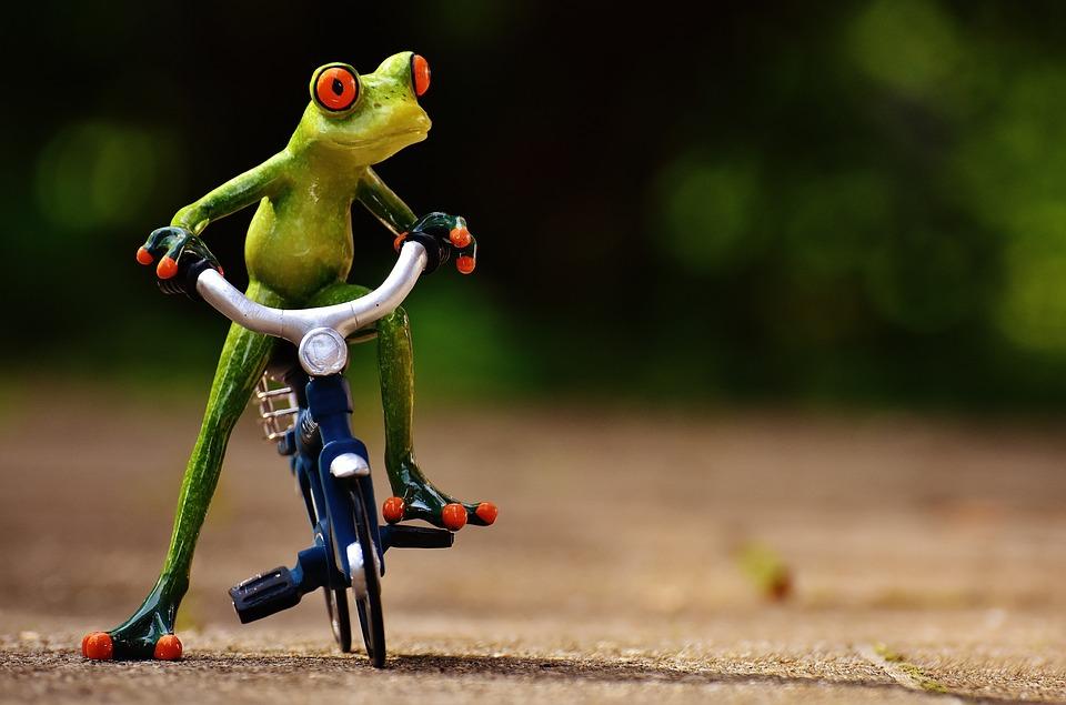 Frog, Bike, Funny, Cute, Sweet, Fig, Drive