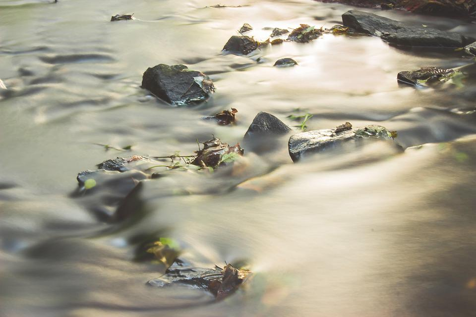 River, Water, Movement, Stones, Fluent, Driving Leaves