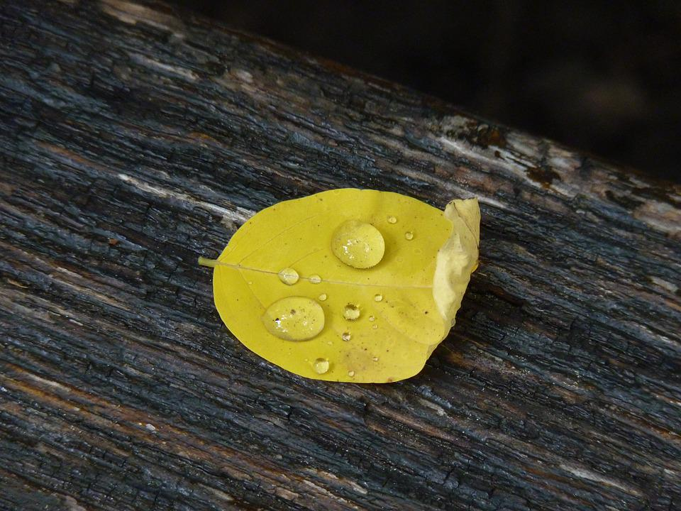 Leaf, Nature, Green, Fall, Autumn Leaf, Drop, Yellow