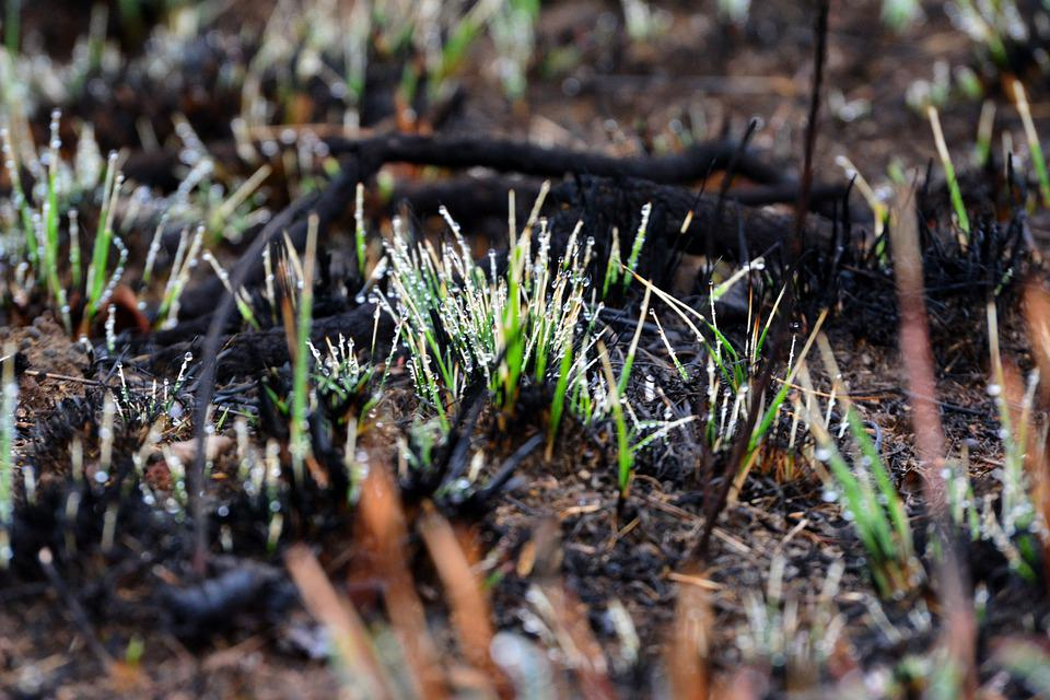 New, Grass, Shoots, Rebirth, Rain, Drop, Droplets