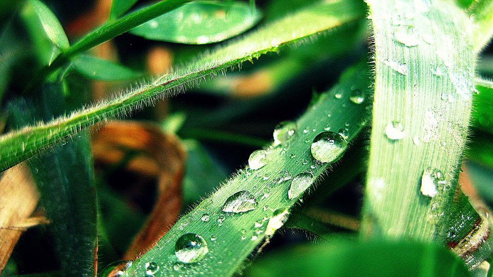 Drop, Leaf, Bubbles, Water, Green, Nature, Plant, Rain