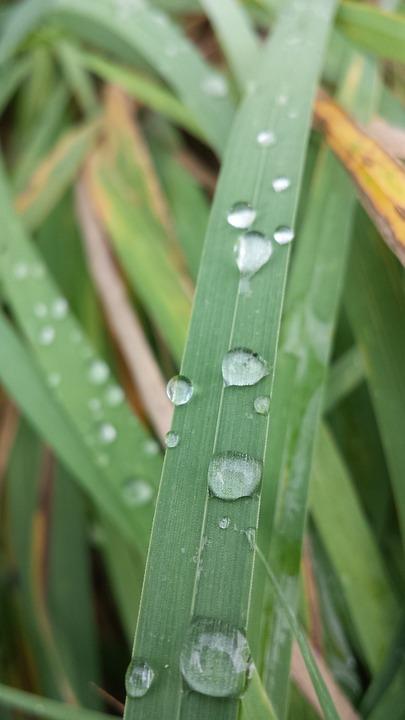 Dew, Frisch, Green, Blade Of Grass, Drop Of Water