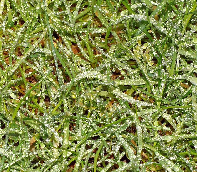 Grass, Rush, Garden, Winter, Melted, Drop Of Water