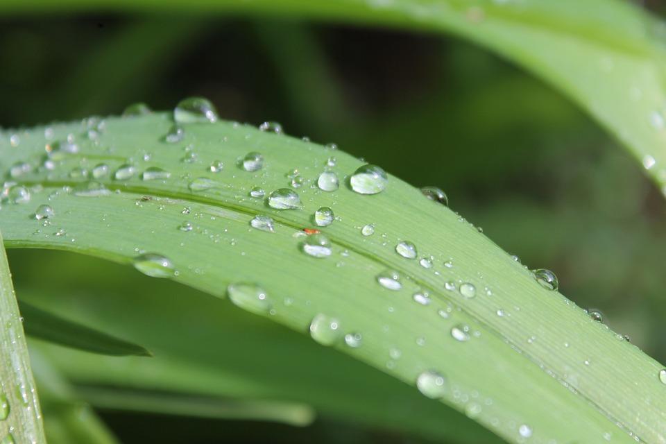 Blade Of Grass, Drop Of Water, Rain, Close, Drip