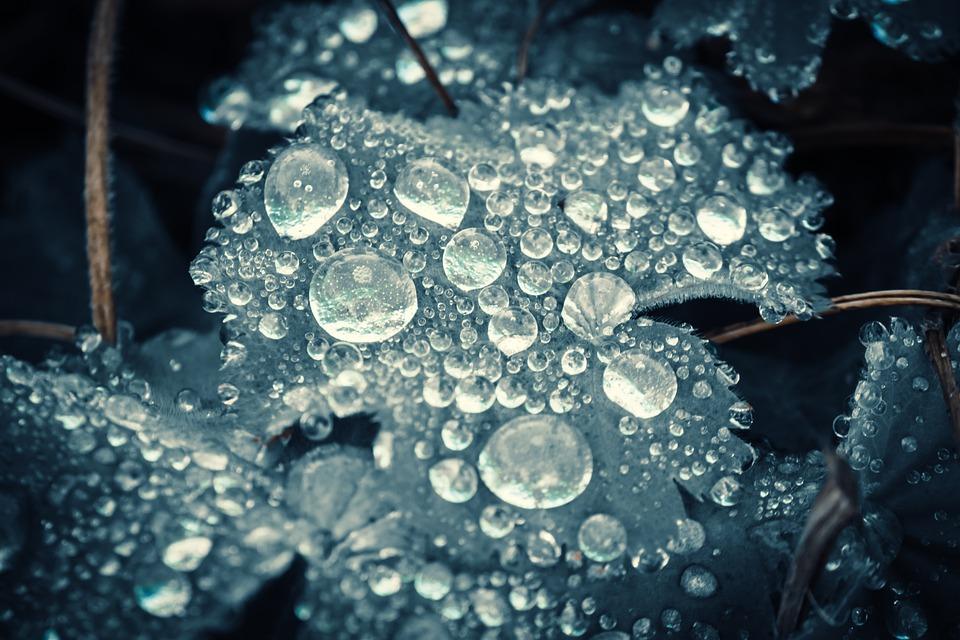 Drip, Rain, Leaf, Wet, Raindrop, Nature, Drop Of Water