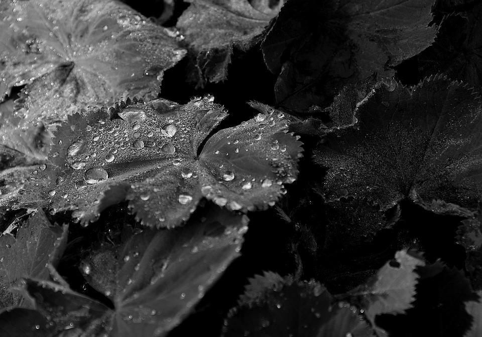 Sheet, Water, Drop, Nature, Foliage, Drops, Dew