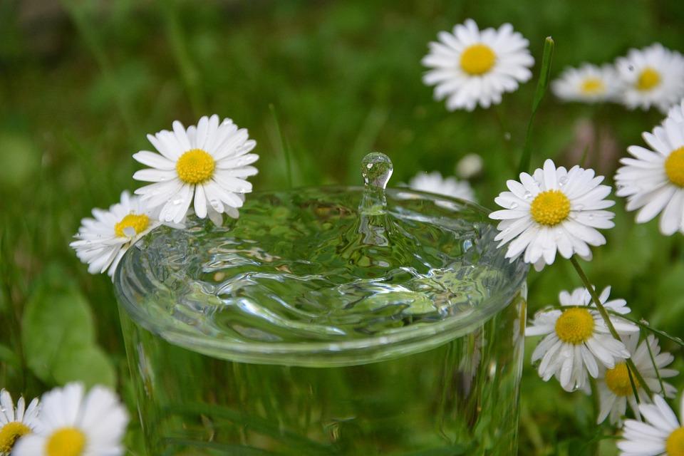 Drop Of Water, Daisy, Glass, Water, Drop, Summer, Grass