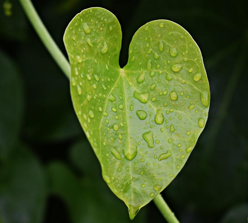 Rain Water, Droplets, Leaf, Nature, Dew, Wet, Droplet