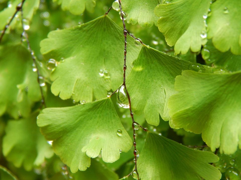 Fern, Green, Wet, Drops