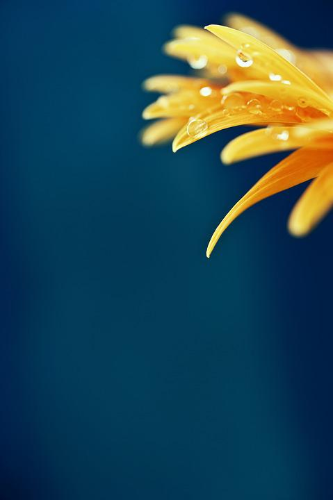 Flower, Macro, Sheet, Yellow, Drops, Rain