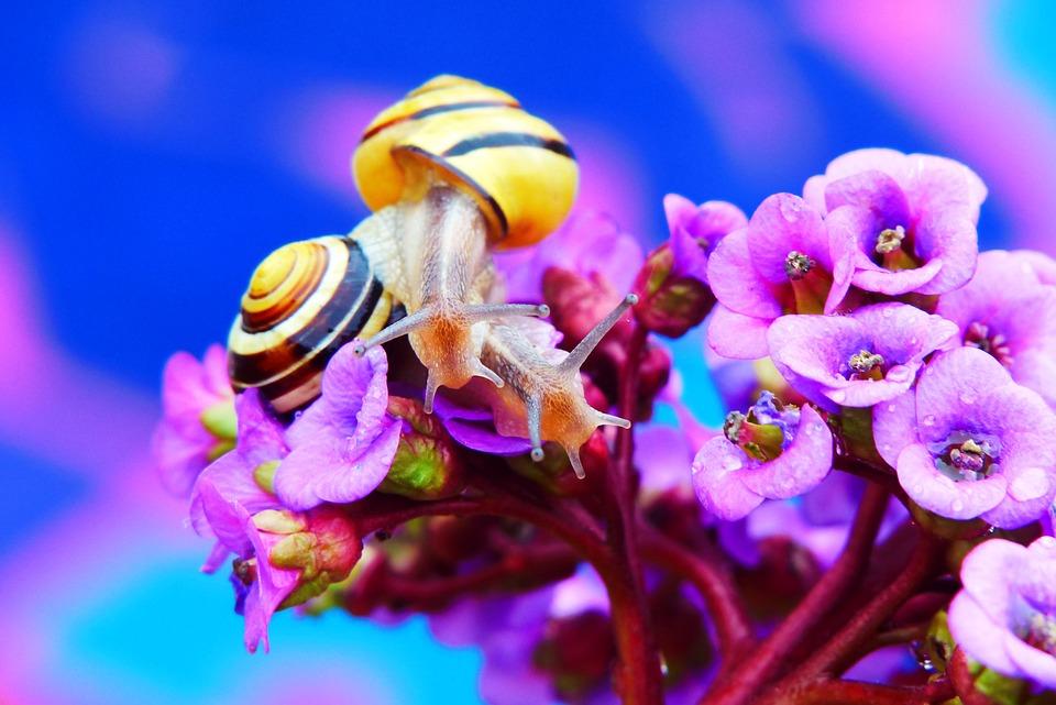 Wstężyki Gajowe, Molluscs, Flower, Rain, Drops, Animals