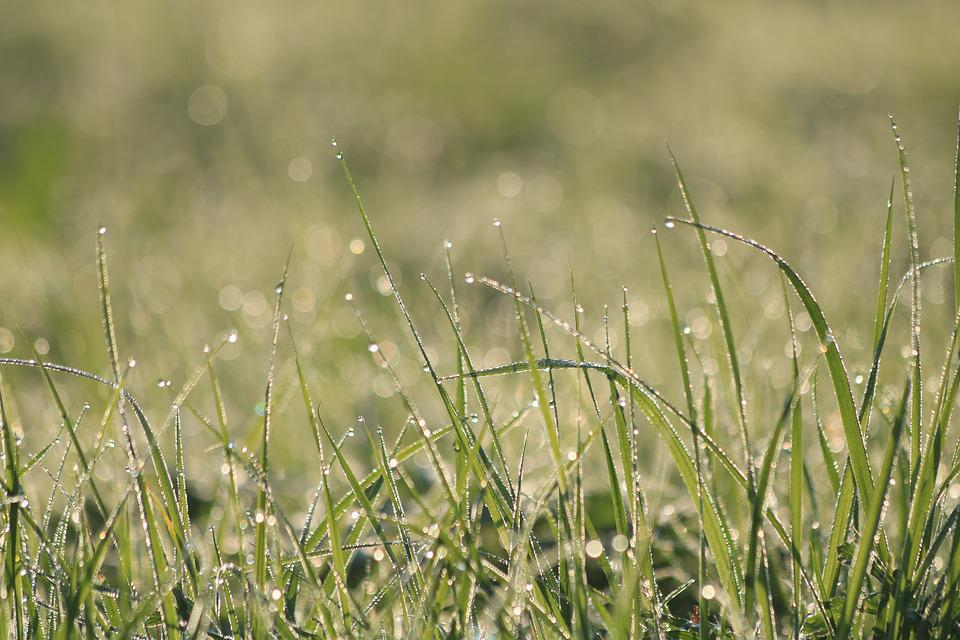 Grass, Dew, Green, Meadow, Nature, Morning, Drops