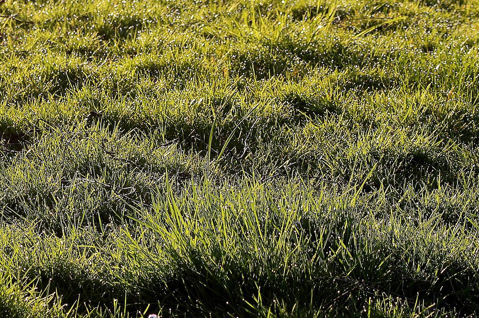 Meadow, Grass, Morgentau, Dewdrop, Drops Of Morning Dew