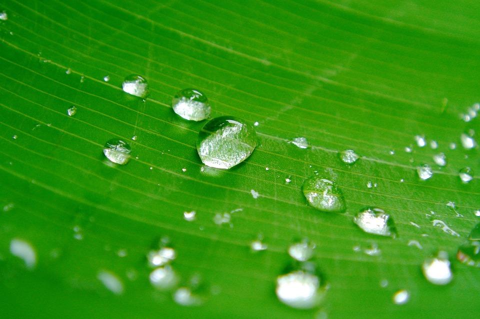 Drops Of Water, Sheet, Plant, Green, Nature, Closeup
