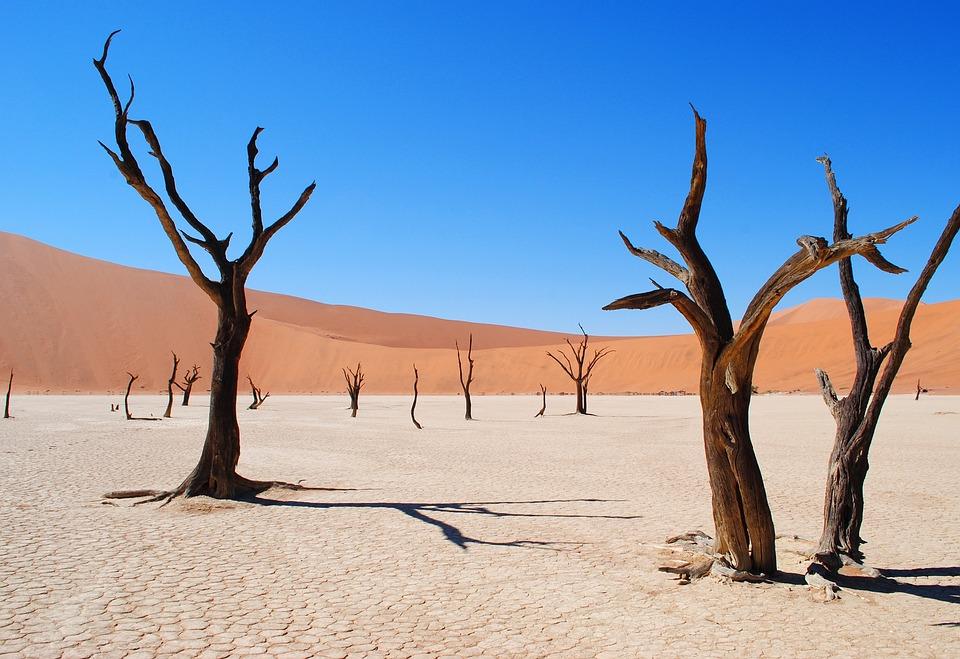 Deadvlei, Namibia, Africa, Desert, Drought, Tree
