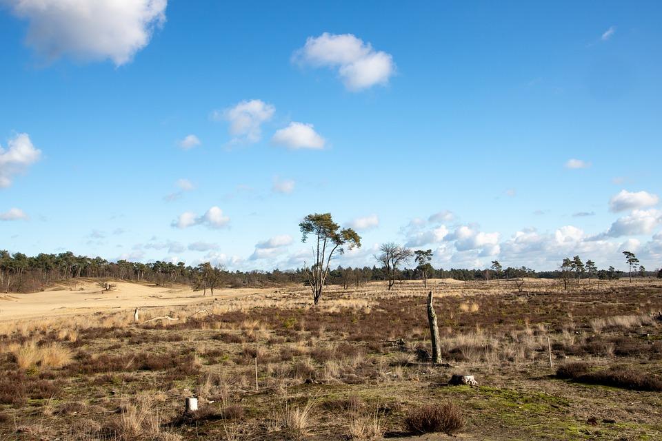 Heide, Clouds, Landscape, Nature, Drunense Duinen