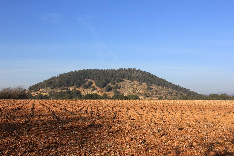 Winter, Vineyard, Dry, Vineyards, Wine, Cold
