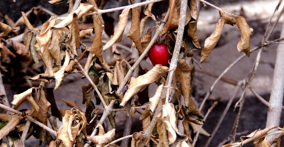 Still Lifes, Dry Twigs, Dry, Twigs