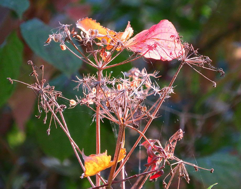Autumn, Fall Foliage, Bright, Seeds, Dry