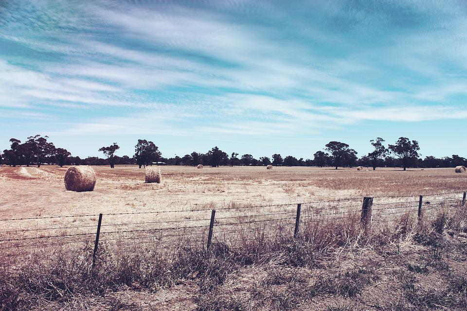 Dry, Bush, Agriculture, Farm, Fence, Blue Sky