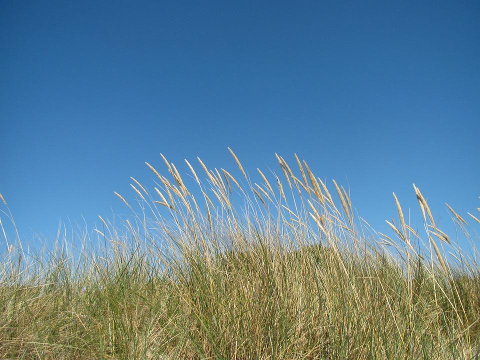 Beach, Sky, Grasses, Fehmarn, Field, Dry Grass, Summer