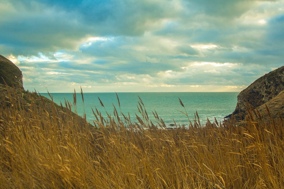 Dorset, Sea, Worbarrow Bay, Horizon, Country, Dry Grass