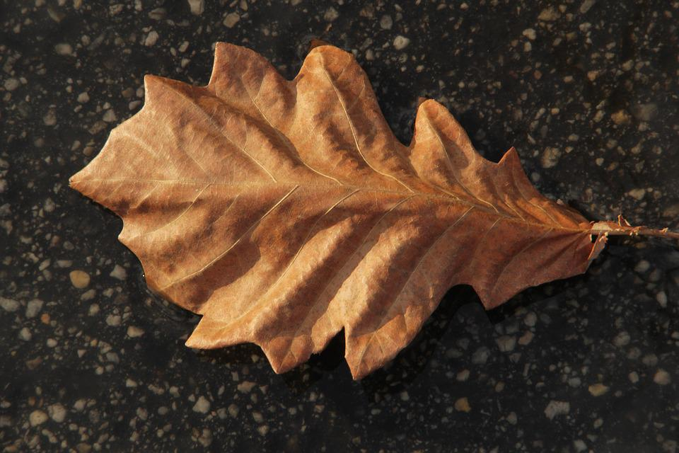 Leaf, Ground, Autumn, Dry
