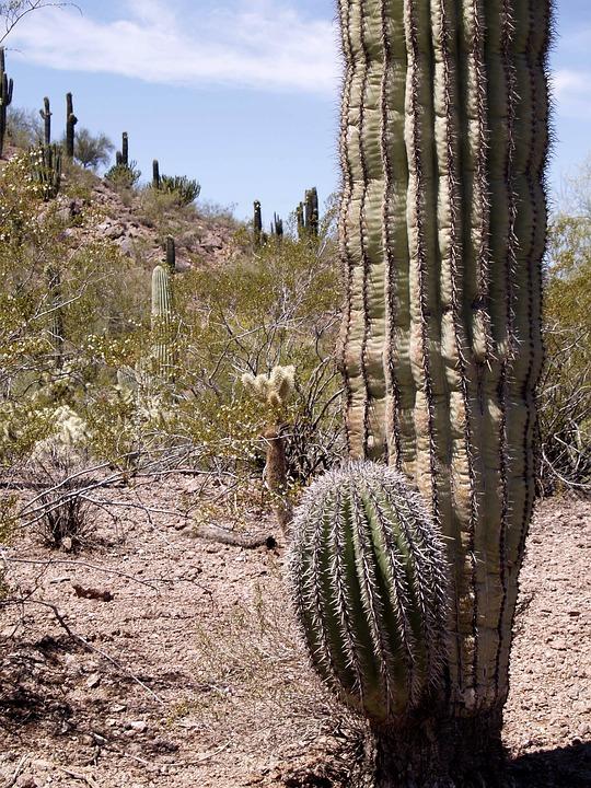 Desert, Landscape, Cactus, Plant, Nature, Got, Dry