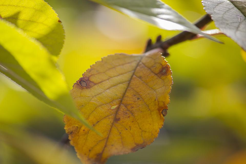 Leaf, Leaves, Branch, Dry, Autumn