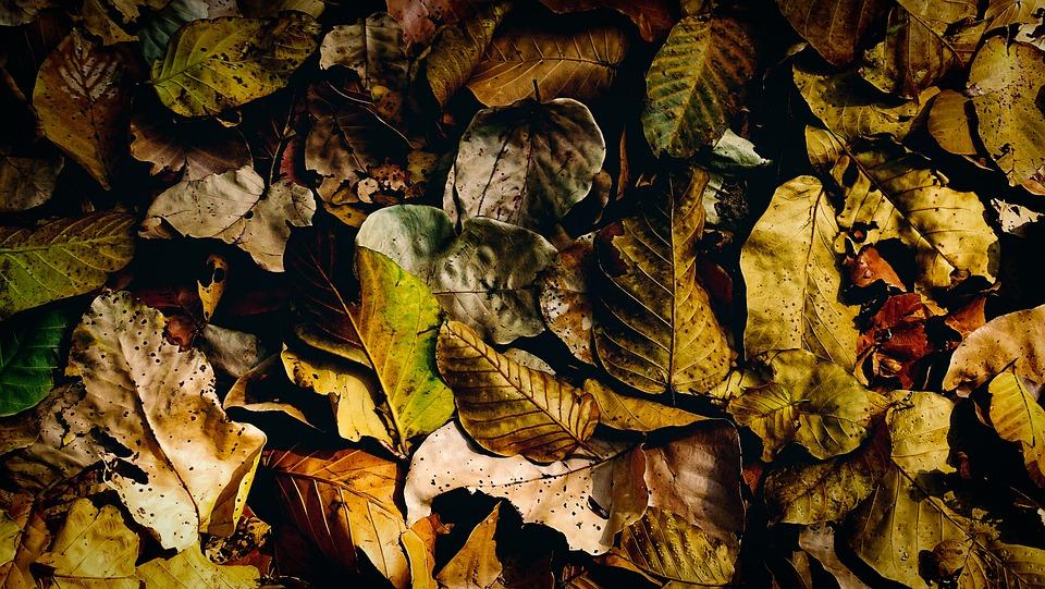 Dry Leaves, Fallen, Dry, Dead Leaves, Background