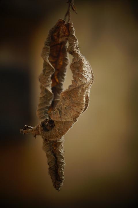 Dry Leaves, Nature, Leaf, Leaves, Plant, Trees