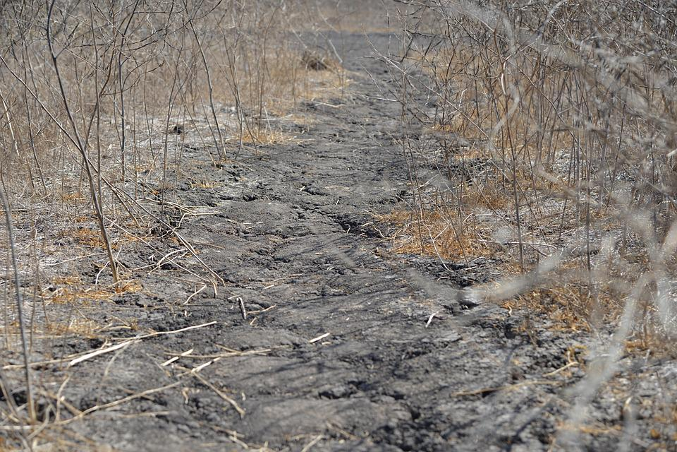 Drought, Away, Dry, Vegetation, Nature, Plant
