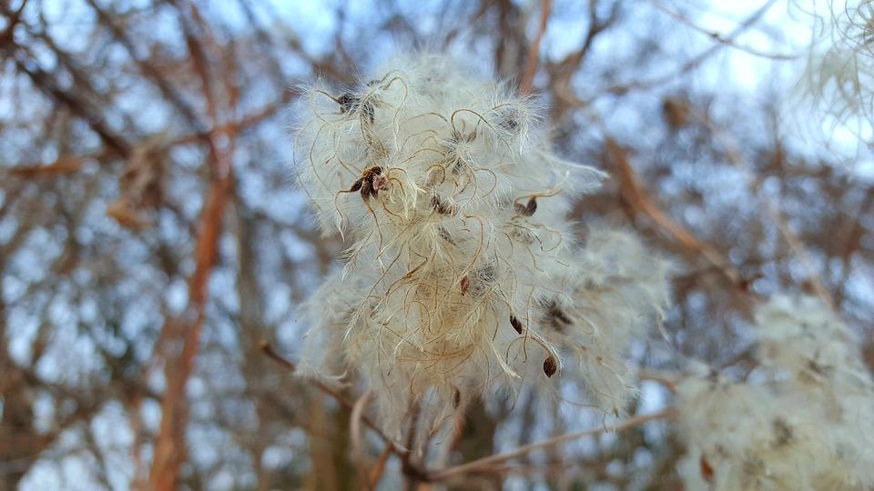 Dry Plant, Nature