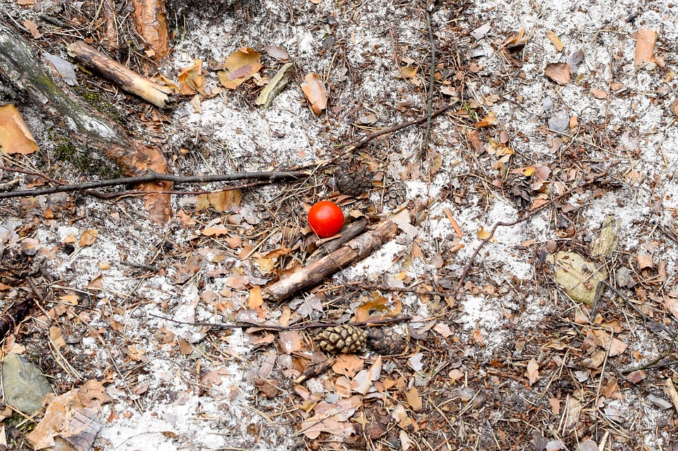 Tomato, Rest, Picnic, Ground, Sand, Nature, Dry, Close