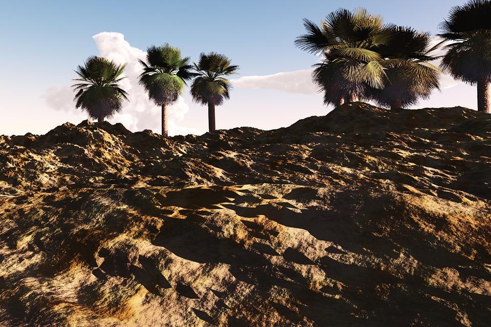 Desert, Hot, Dry, Landscape, Scenery, Palms, Palm