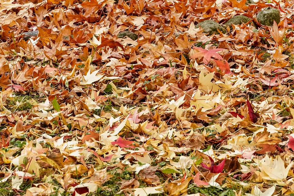 Leaf, Food, Nature, Season, Vegetable, Meal, Dry