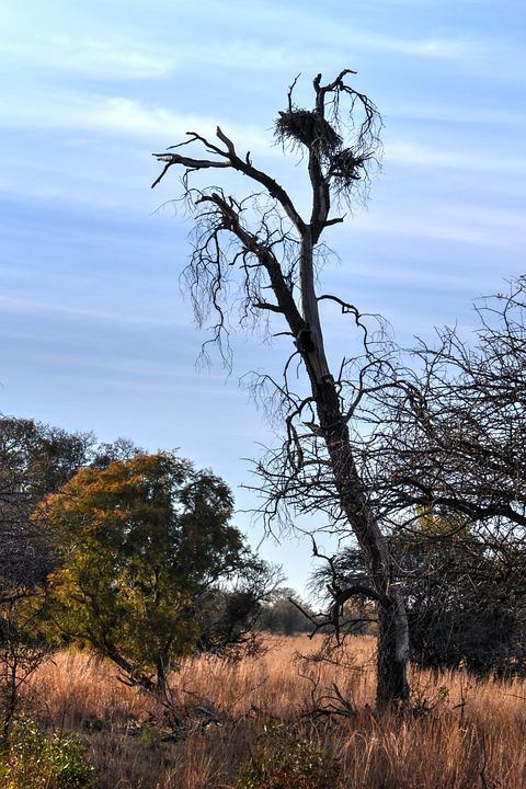 Dry Tree, Safari, Game Farm, Birds Nest