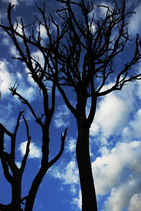 Tree, Landscape, Sky, Clouds, Dry Tree
