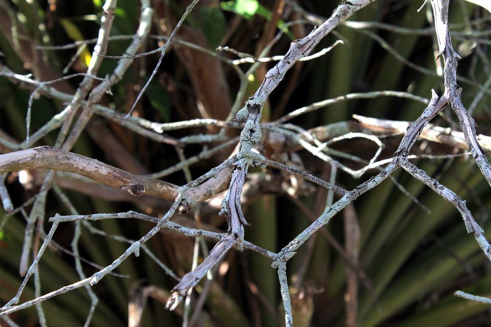 Twigs, Dry Twigs, Dry Tree, Still Lifes, Old Tree