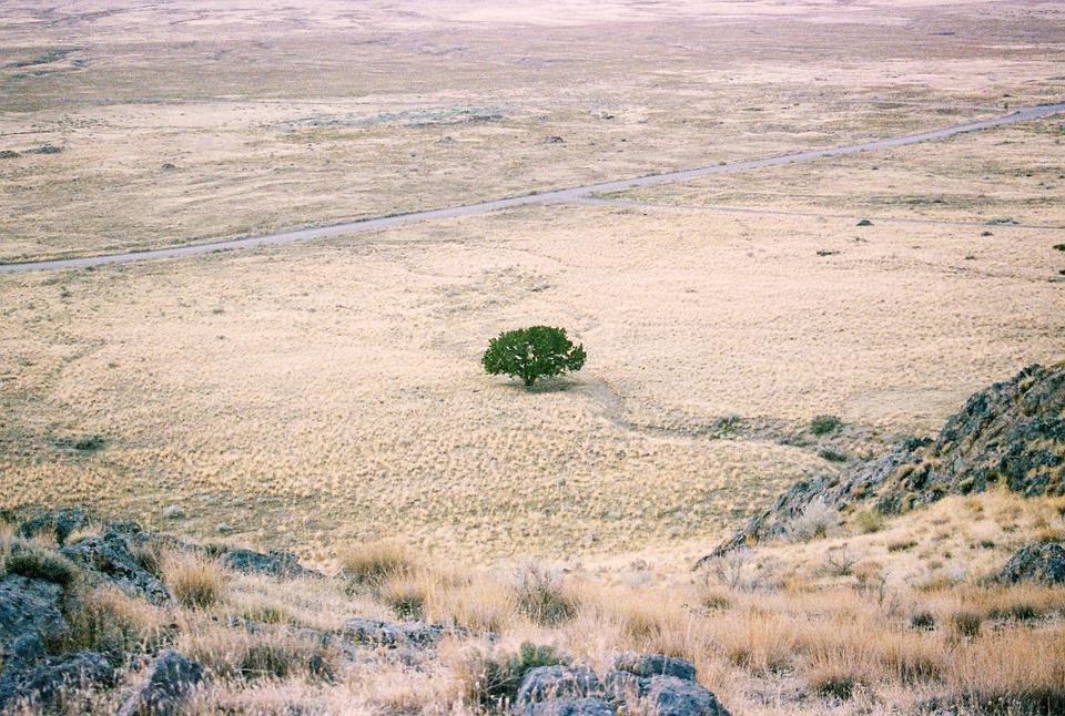 Tree, Desert, Landscape, Land, Drought, Dryland