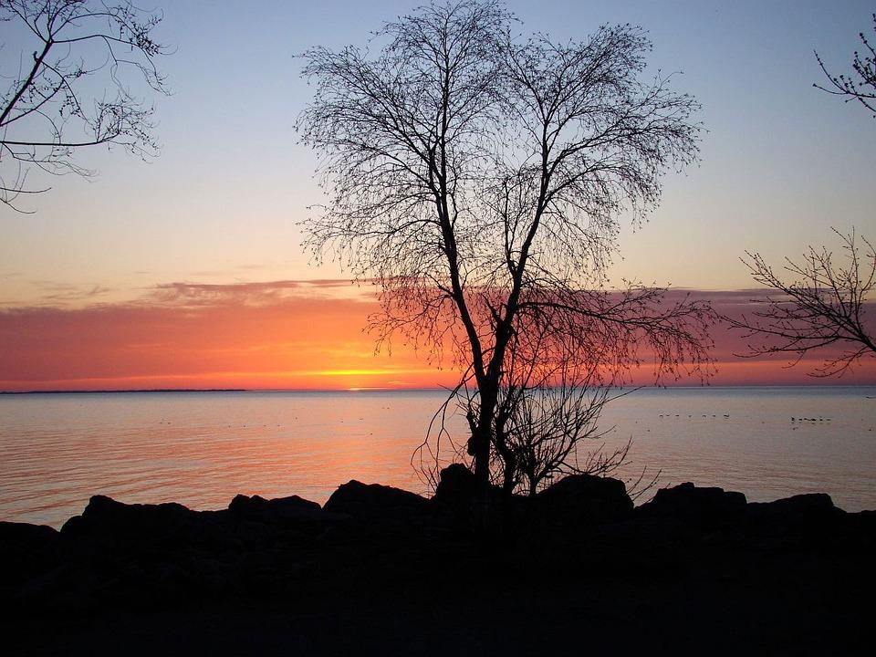 Lake, Water, Bird, Duck, Tree, Clouds, Sky, Sun