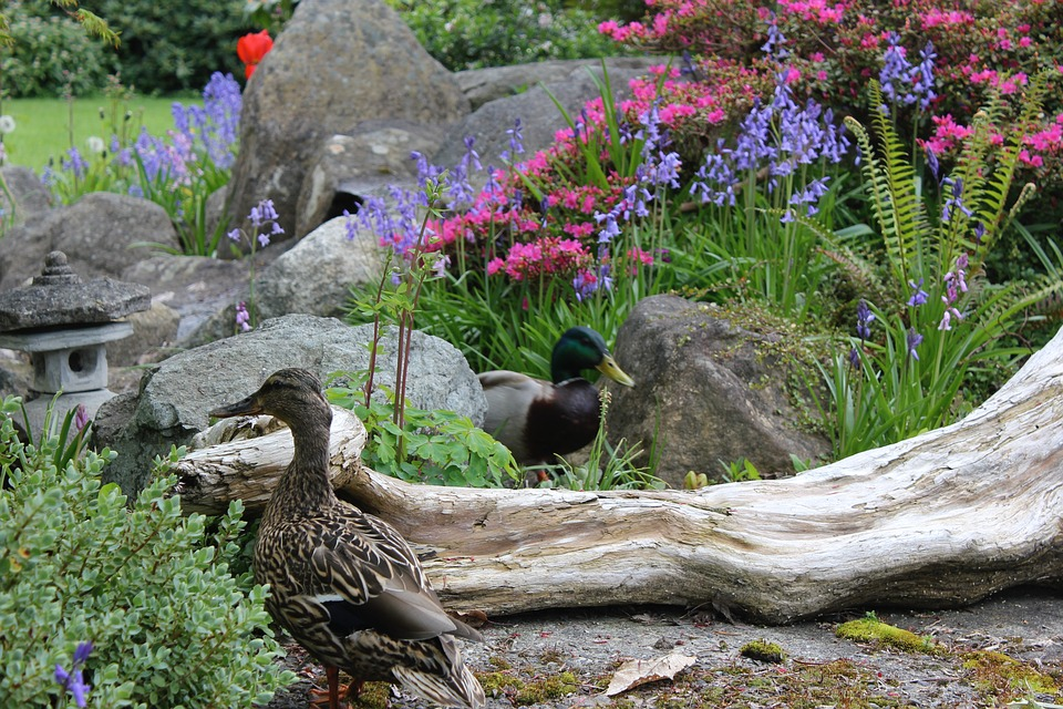 Nature, Flower, Outdoors, Flora, Ducks, Azalea