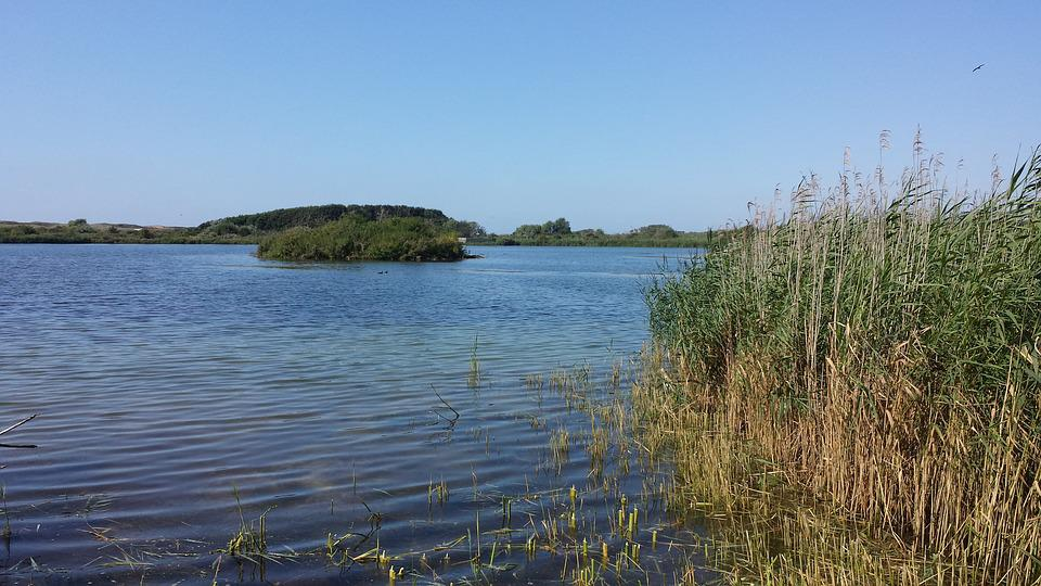 Dune Area, Lake In The Dunes, Sunny Water, Reed